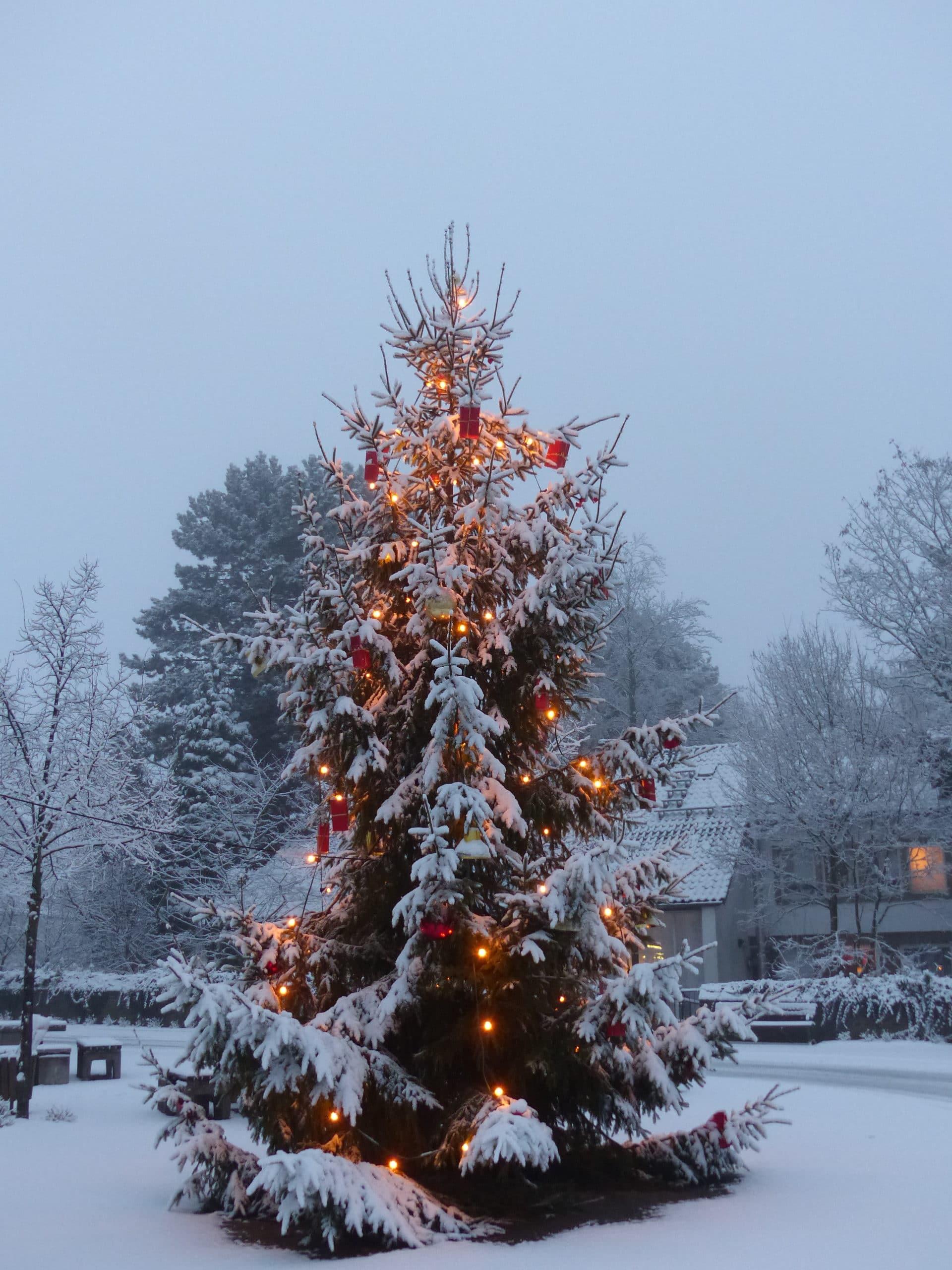 Alle Jahre wieder Das Weihnachtsbaumfest (48)